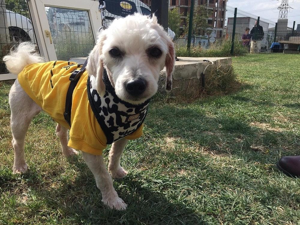 2018/10/kopegi-veterinerin-bahcesine-terk-etti-kameraya-boyle-yakalandi---bursa-haberleri-20181011AW51-1.jpg
