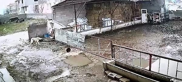 2019/02/once-uyusturucu-igneyle-vurdu-sonra-cop-kamyonuna-atti-f86e2b4dc010-1.jpg