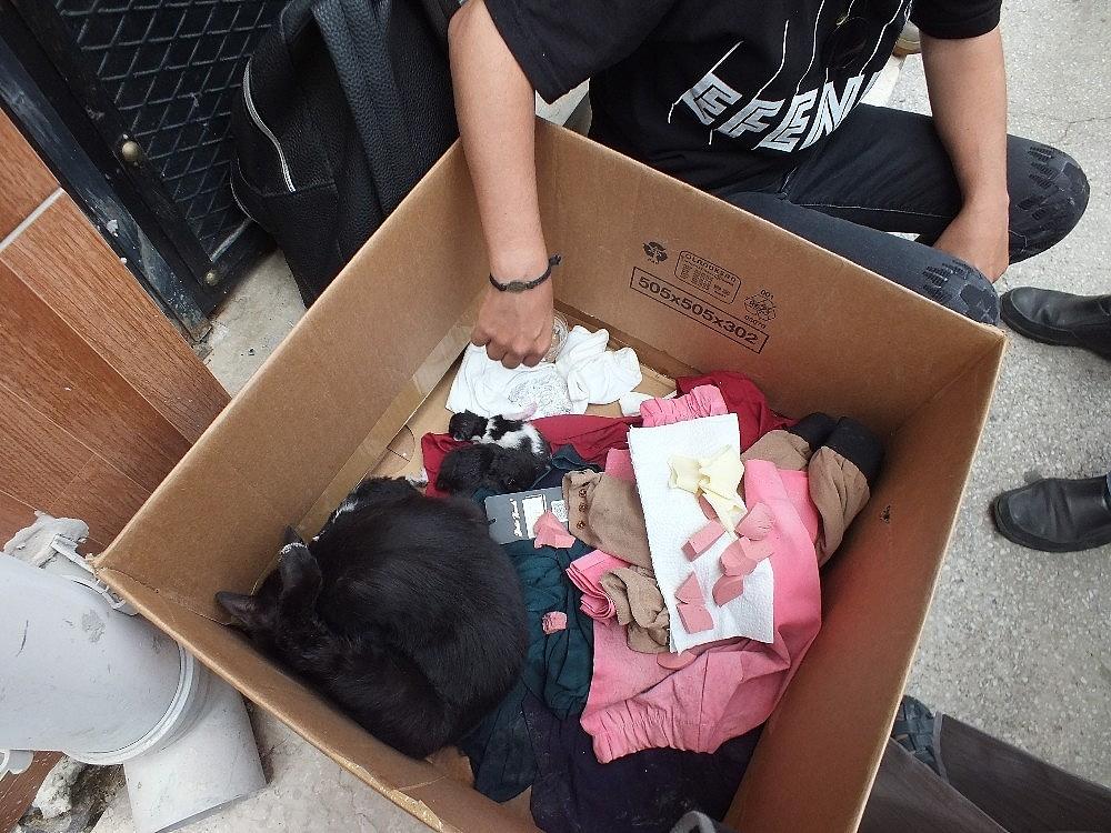 2019/06/okulda-yavrulayan-kediyi-gorunce-saskinlik-yasadilar---bursa-haberleri-20190620AW73-3.jpg