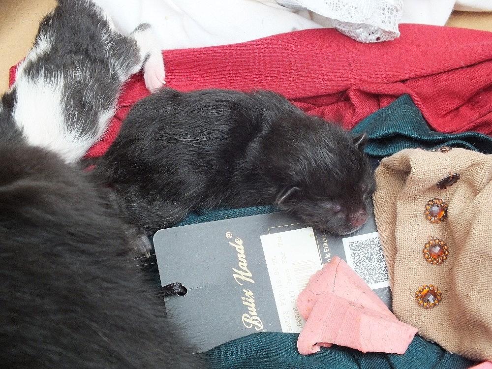 2019/06/okulda-yavrulayan-kediyi-gorunce-saskinlik-yasadilar---bursa-haberleri-20190620AW73-5.jpg