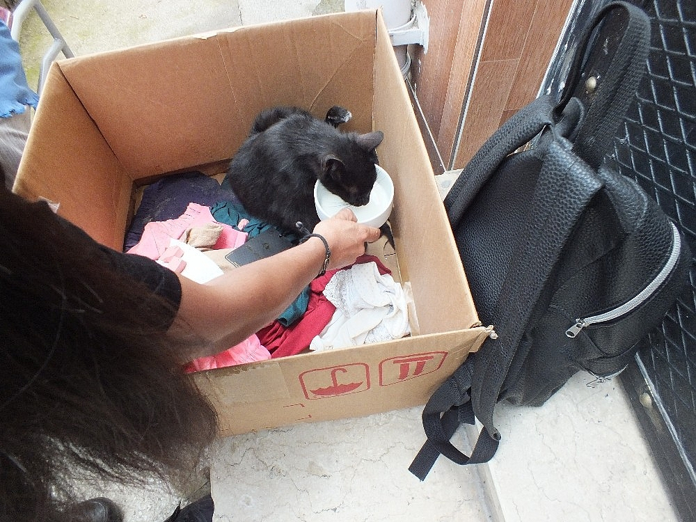 2019/06/okulda-yavrulayan-kediyi-gorunce-saskinlik-yasadilar---bursa-haberleri-20190620AW73-6.jpg