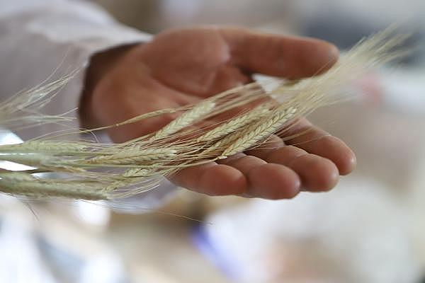 2019/07/ata-tohumlarinin-bugdayindan-ekmek-yapip-internetten-satiyor---bursa-haberleri-ba9d2c000a60-4.jpg