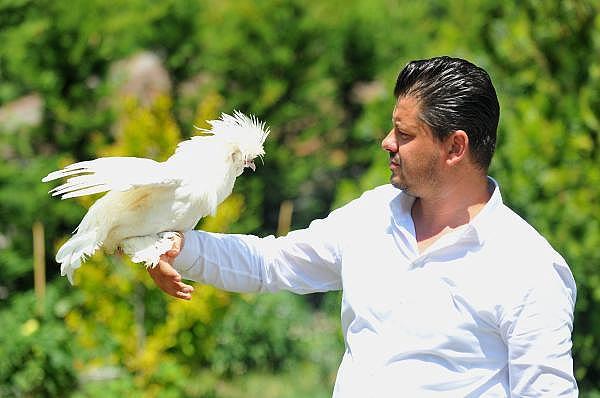 2019/07/milli-irk-osmanli-sultan-tavuklari-hobicilerin-gozdesi---bursa-haberleri-6d90765e4800-2.jpg