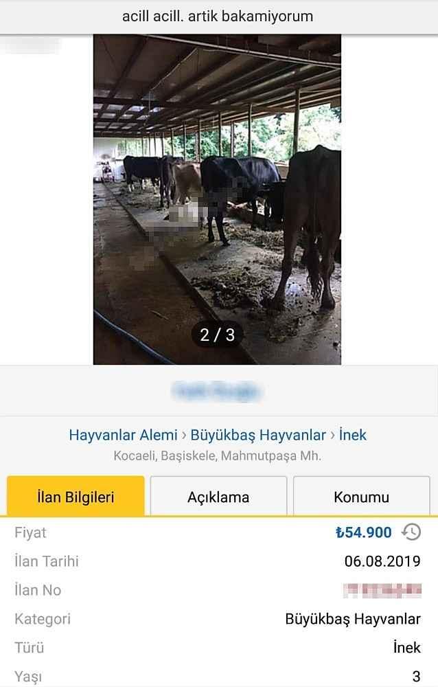 2019/10/internet-uzerinden-ineklerini-satmak-isterken-dolandirildilar-20191020AW83-5.jpg