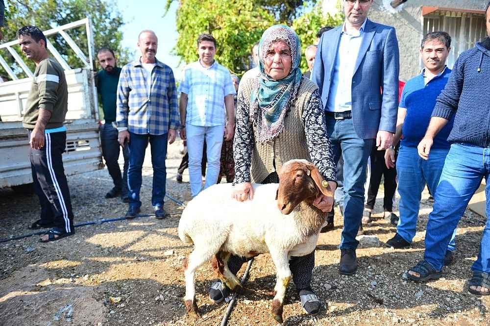 2019/11/koyunlari-calinan-ayse-teyzenin-gozyaslari-dindi-20191110AW85-1.jpg