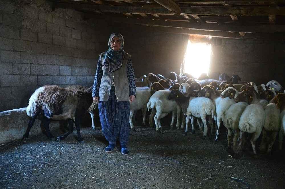 2019/11/koyunlari-calinan-ayse-teyzenin-gozyaslari-dindi-20191110AW85-4.jpg
