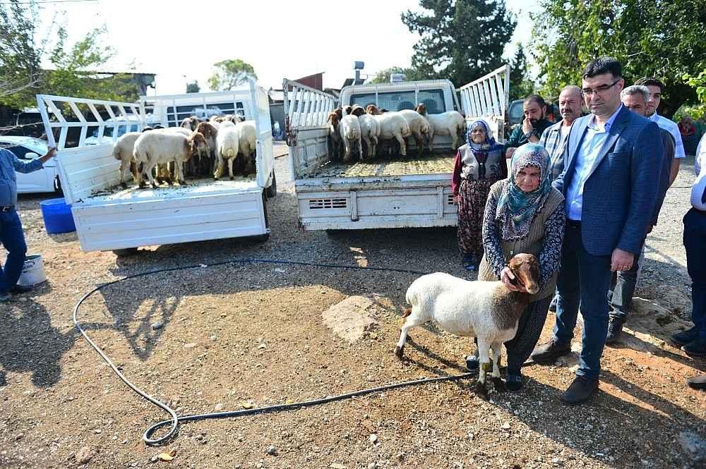 2019/11/koyunlari-calinan-ayse-teyzenin-gozyaslari-dindi-20191110AW85-5.jpg