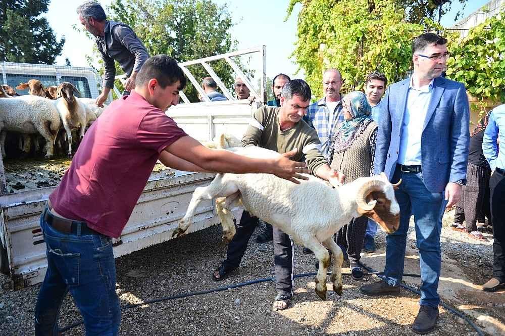 2019/11/koyunlari-calinan-ayse-teyzenin-gozyaslari-dindi-20191110AW85-7.jpg