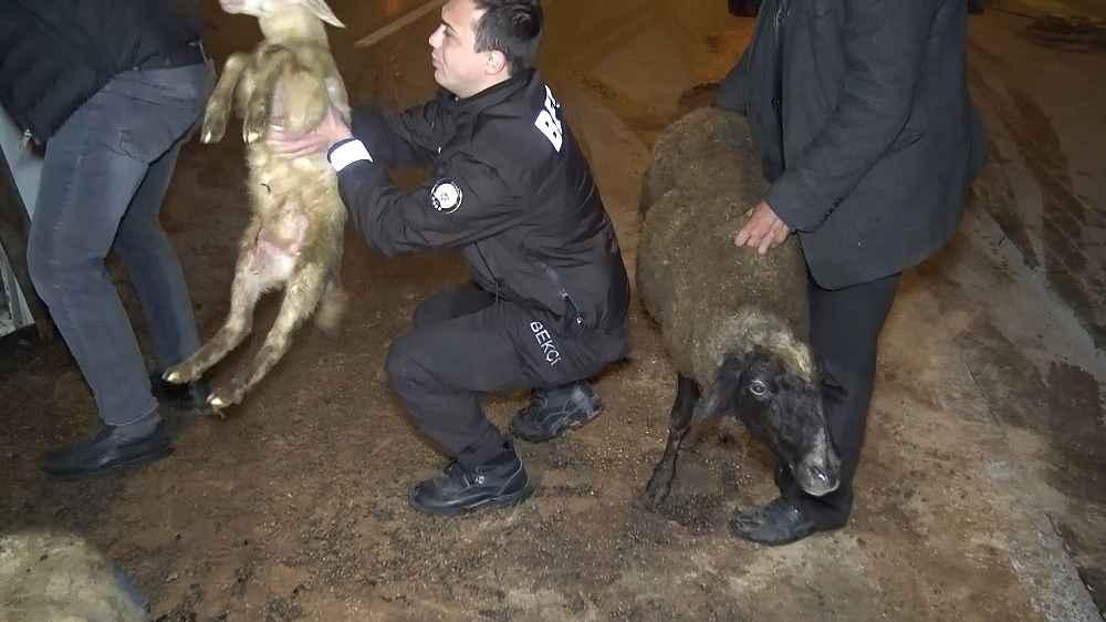 2019/11/koyunlari-tasiyan-kamyon-devrildi-8-kuzu-telef-oldu---bursa-haberleri-20191107AW84-2.jpg