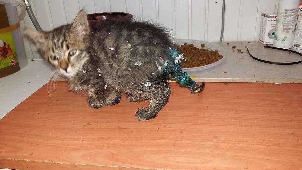 2019/11/olmek-uzere-olan-yavru-kedinin-buyuk-degisimi---bursa-haberleri-20191127AW86-1.jpg
