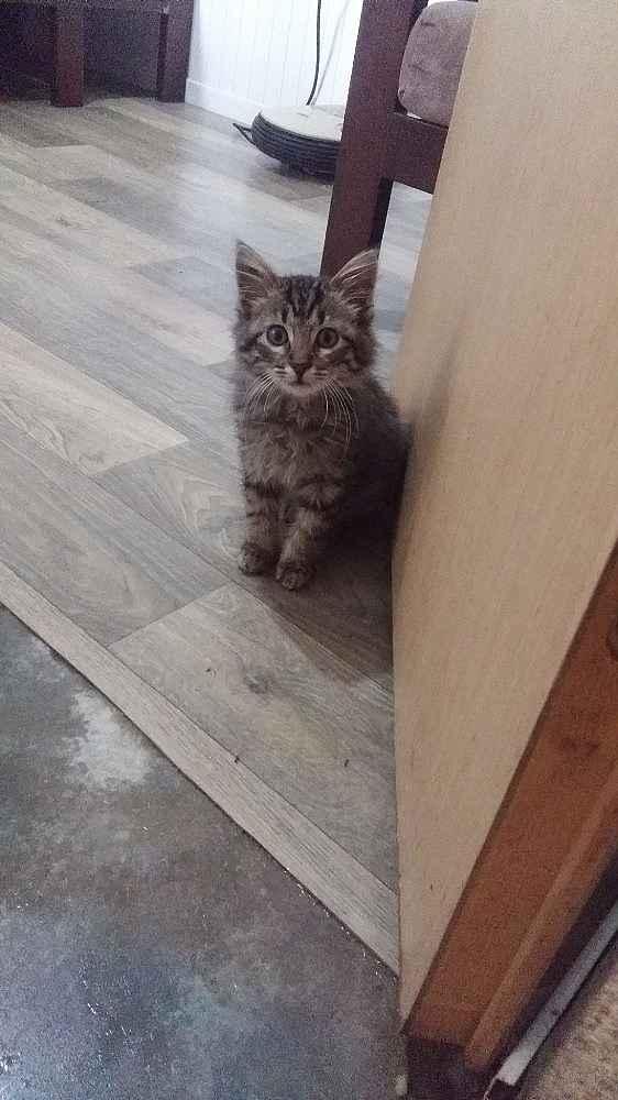 2019/11/olmek-uzere-olan-yavru-kedinin-buyuk-degisimi---bursa-haberleri-20191127AW86-5.jpg