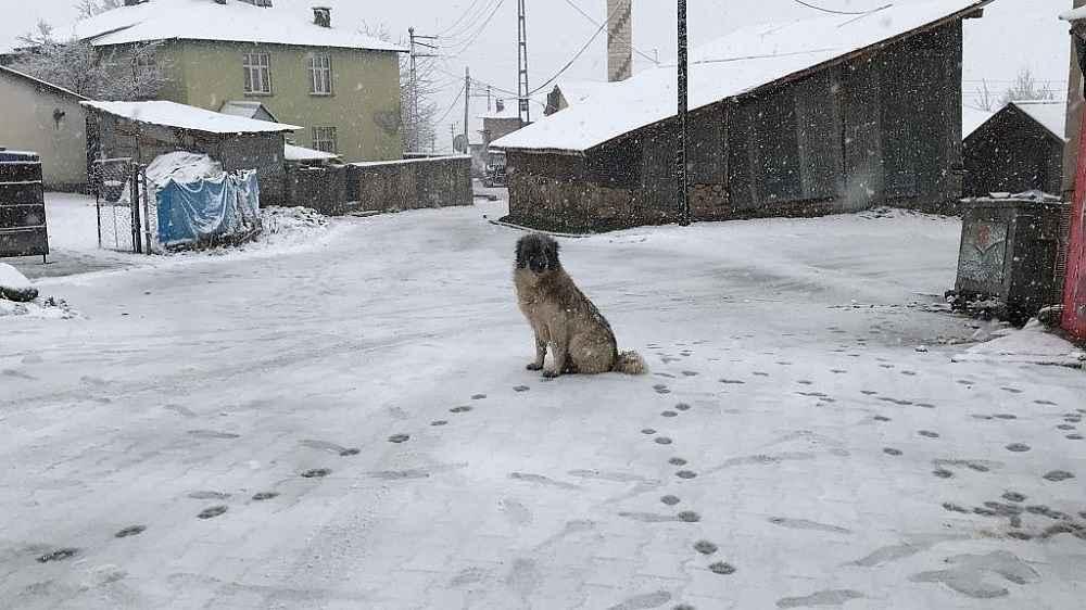 2019/12/bingolun-karliova-ve-yedisu-ilceleri-gune-karla-uyandi-20191202AW87-11.jpg