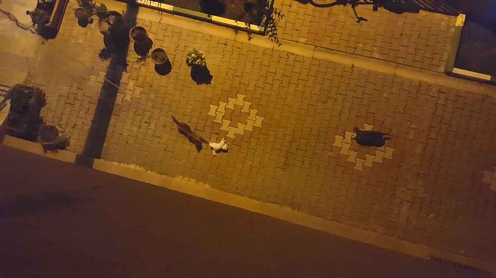 2020/01/sokak-kedilerinin-oyuncak-kediyle-imtihani---bursa-haberleri-20200114AW90-2.jpg