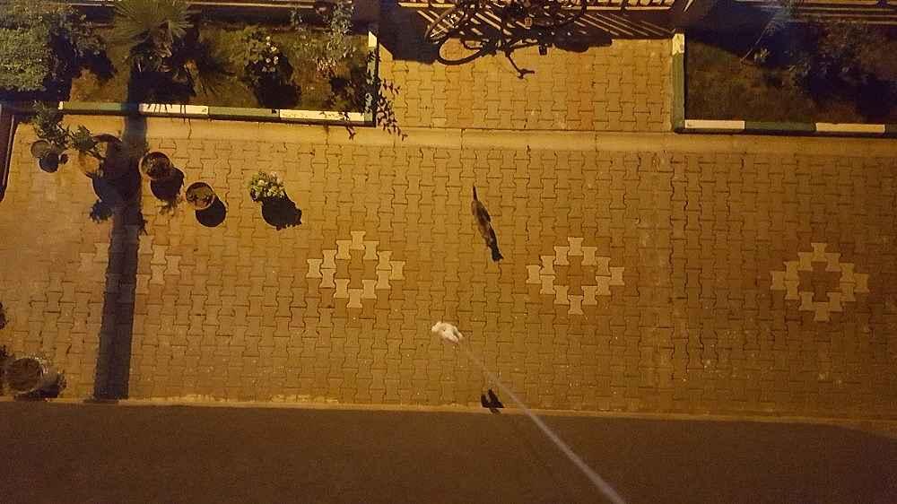 2020/01/sokak-kedilerinin-oyuncak-kediyle-imtihani---bursa-haberleri-20200114AW90-3.jpg