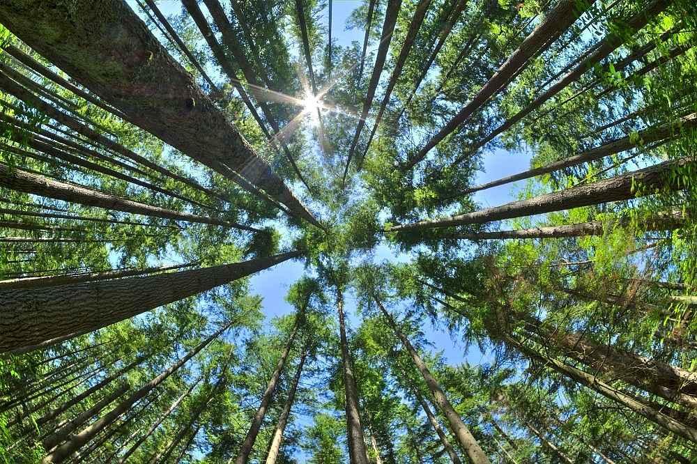 2020/01/turkiyenin-yuzde-29u-ormanlarla-kapli-20200103AW89-1.jpg