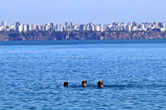 2020/11/1605969064_kisitlama-oncesi-dunyaca-unlu-sahil-turistler-10-13749903_o.jpg