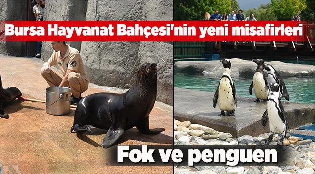 Bursa Hayvanat Bahçesi'nin yeni misafirleri fok ve penguen   Bursa haberleri