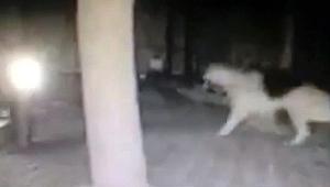 Bodrum depremini sokak köpekleri önceden fark etti