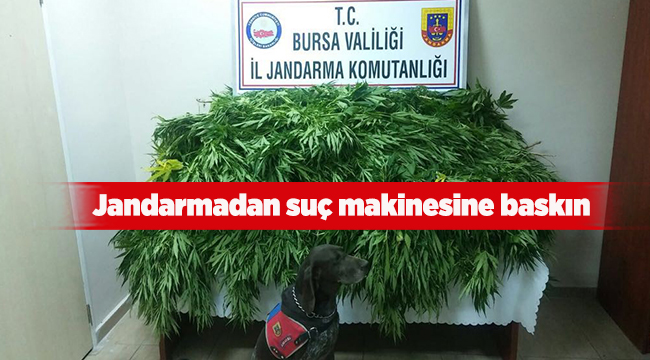 Jandarmadan suç makinesine baskın | Bursa haberleri