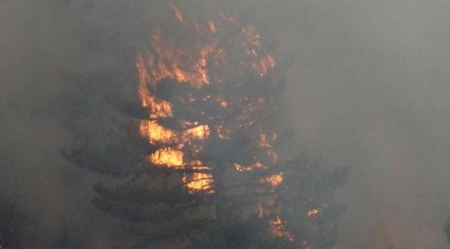 Kütahya'da başlayan orman yangını BİLECİK - Bozüyük'e doğru ilerliyor!