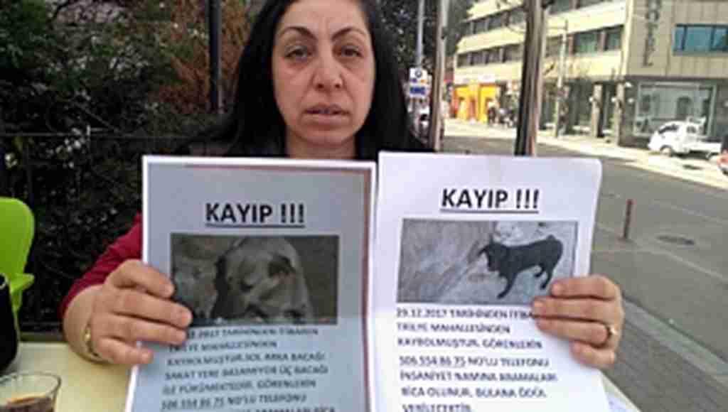 Kayıp köpekleri ilanla arıyor - Bursa Haberleri