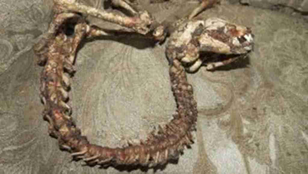 İlginç hayvan iskeleti, bina sakinlerini korkuttu!