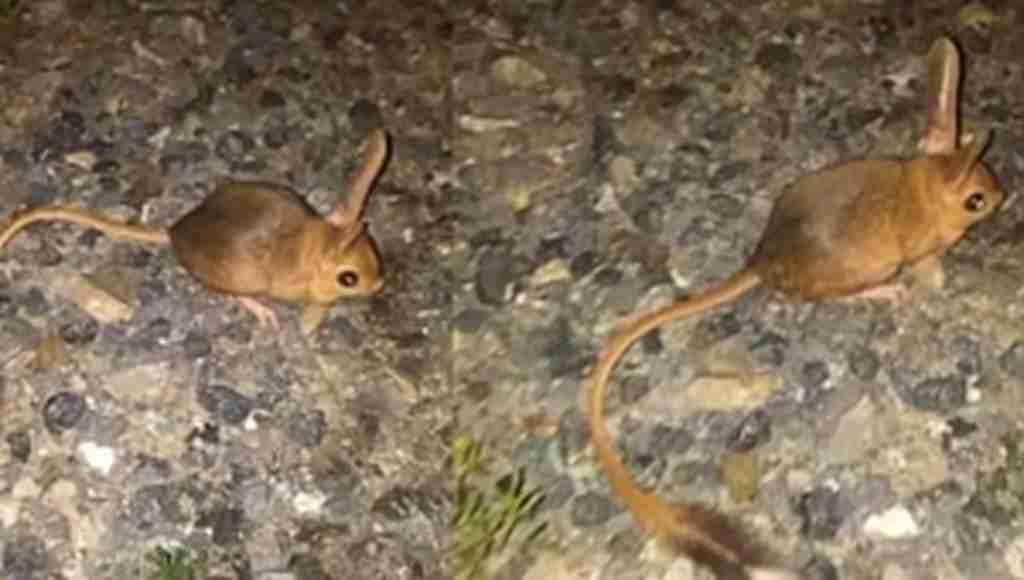 Dünyanın en ilginç hayvanı Türkiye'de görüldü