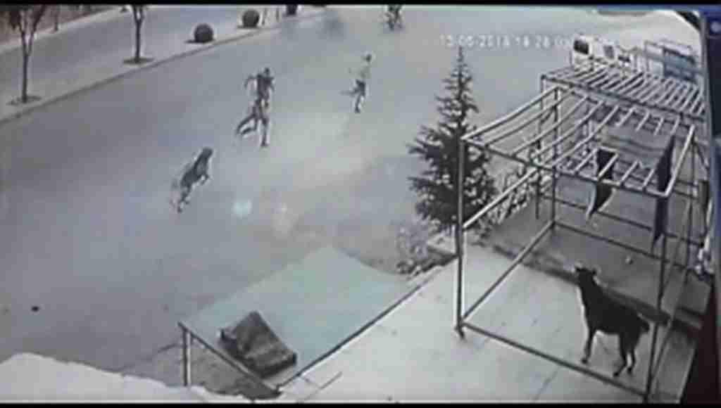 Köpekten kaçan çocuğa, otomobil çarpıp kaçtı