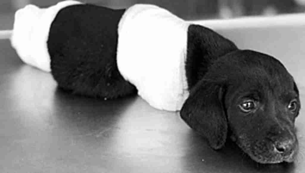 Türkiye'yi ayağa kaldıran yavru köpeğin bacakları ve kuyruğunun kopması olayında tutuklama!