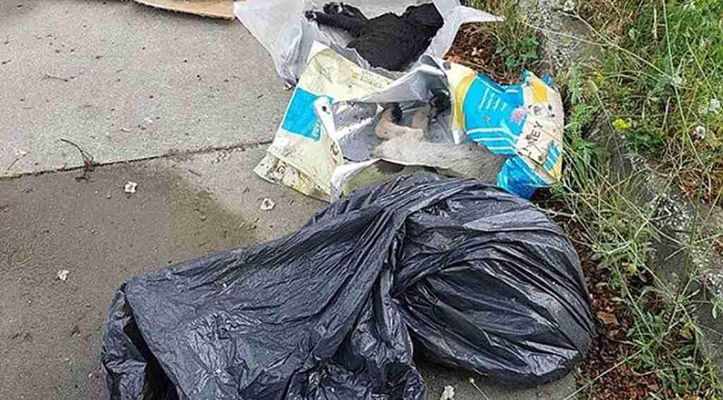 Yavru köpek vahşeti gündemi korurken, 5 yavru köpek zehirlenerek öldürüldüğü iddiası
