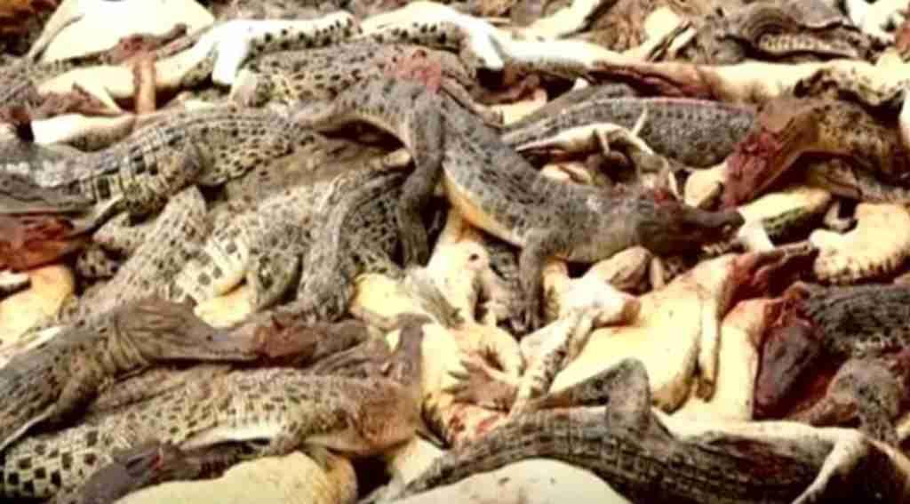 Yakınlarını kaybeden öfkeli köylüler, çiftliği basıp katliam yaptı