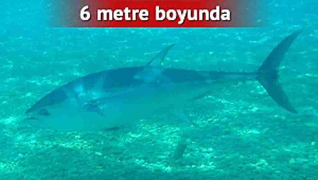 Antalyanın ünlü sahilinde şaşkına çeviren görüntü.. Tam 6 metre