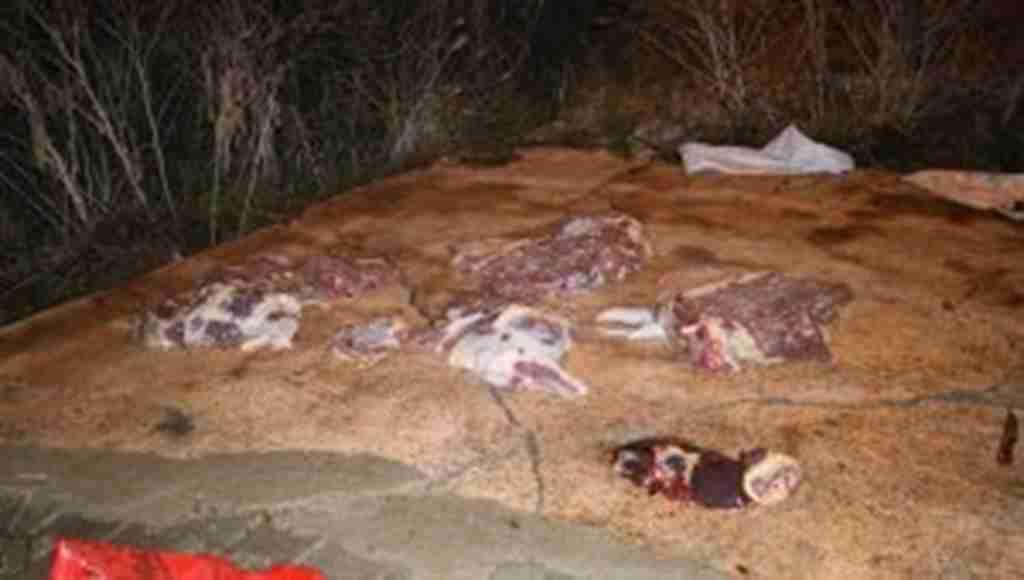 Bunları insanlara yedireceklerdi! Yüzlerce kilogram at eti ele geçirildi