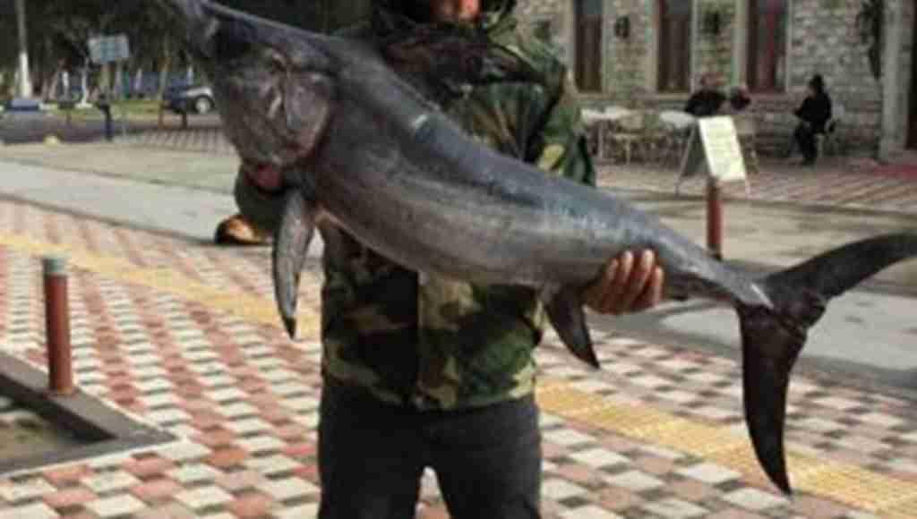 İzmir'de oltayla 42 kiloluk kılıç balığı yakaladılar