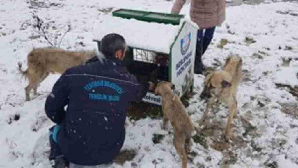 Karda aç kalan hayvanlar için belediye seferber oldu - Bursa Haberleri