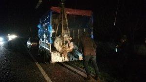 300 kiloluk inek kamyonetten karayoluna savruldu - Bursa Haberleri