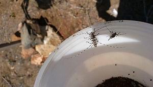 4 milyon orman zararlısı böcek imha edildi