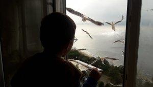 4 yaşındaki çocuk pencereden martıları eliyle besliyor - Bursa Haber