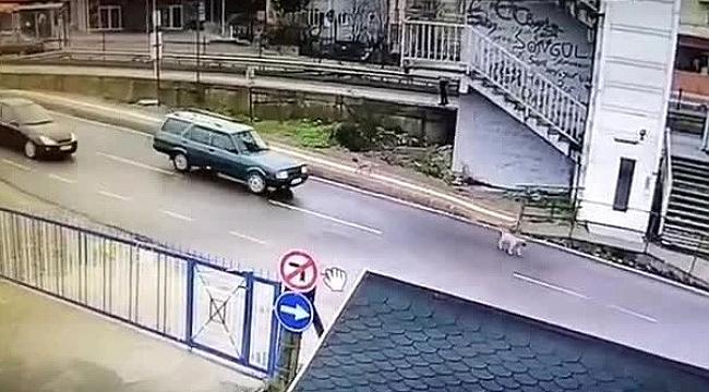 Bartın'da yavru köpeği ezip kaçan zanlı yakalandı