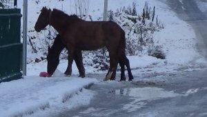 Başı boş atlar sokak sokak yiyecek aradı - Bursa Haber