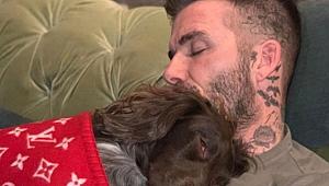 Beckham'ın köpeğine örttüğü battaniyenin fiyatı pes dedirtti