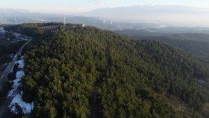 Bursa'nın en güzel ormanlarında çevre felaketi - Bursa Haber