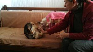 Felçli kuzunun süt annesi bir köpek - Bursa Haber