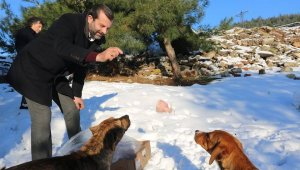Gürsu Belediyesi'nden karda hayvanlara yiyecek - Bursa Haber