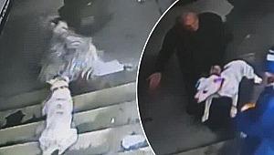 İlginç olay... Sahibiyle lokantada yemek yiyen keçiye köpek saldırdı