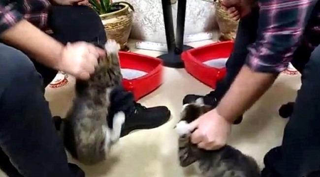 İşadamı kediyi sopayla dövdü; dehşet anları kamerada