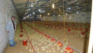 Kanatlı hayvan üreticileri sıkıntılarını dile getirdi - Bursa Haberleri