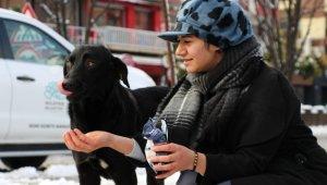 Kara kışta can dostları için mama dağıttılar - Bursa Haber