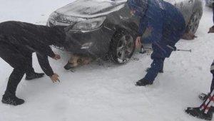 Otomobilin altında kalan sokak köpeğini, jandarma kurtardı - Bursa Haber