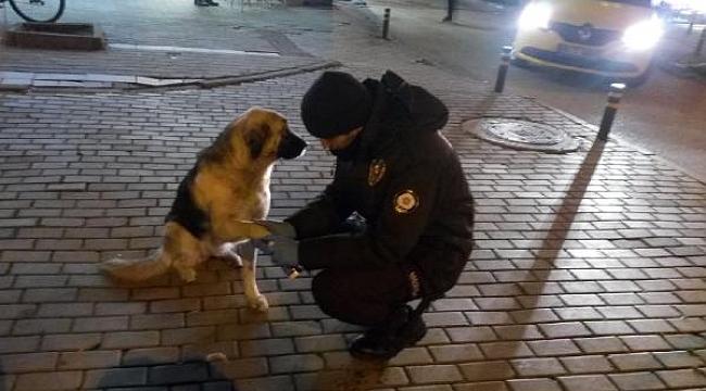 Patisi kesilen köpeğe bekçiler pansuman yaptı - Bursa Haber